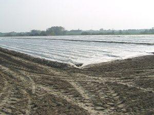 Frühkartoffelfeld mit Vlies 400x300px   Kartoffel Winte