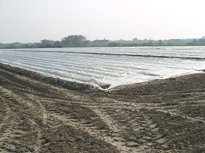 Frühkartoffelfeld mit Vlies 400x300px | Kartoffel Winte