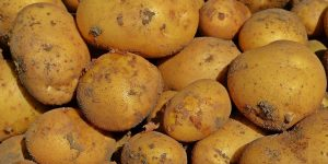 Kartoffeln 1574x787px | Kartoffel Winte