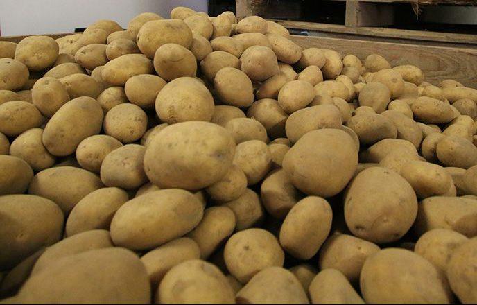 Lose Kartoffeln 800x533px | Kartoffel Winte